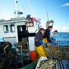 Martin & Jake Gilbert, Chris Martin landing another Lobster pot - Newquay, Cornwall
