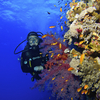 Laura Guy diving The Red Sea - Marsa Alam, Egypt